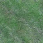Grass #3 - Seamless - 2K