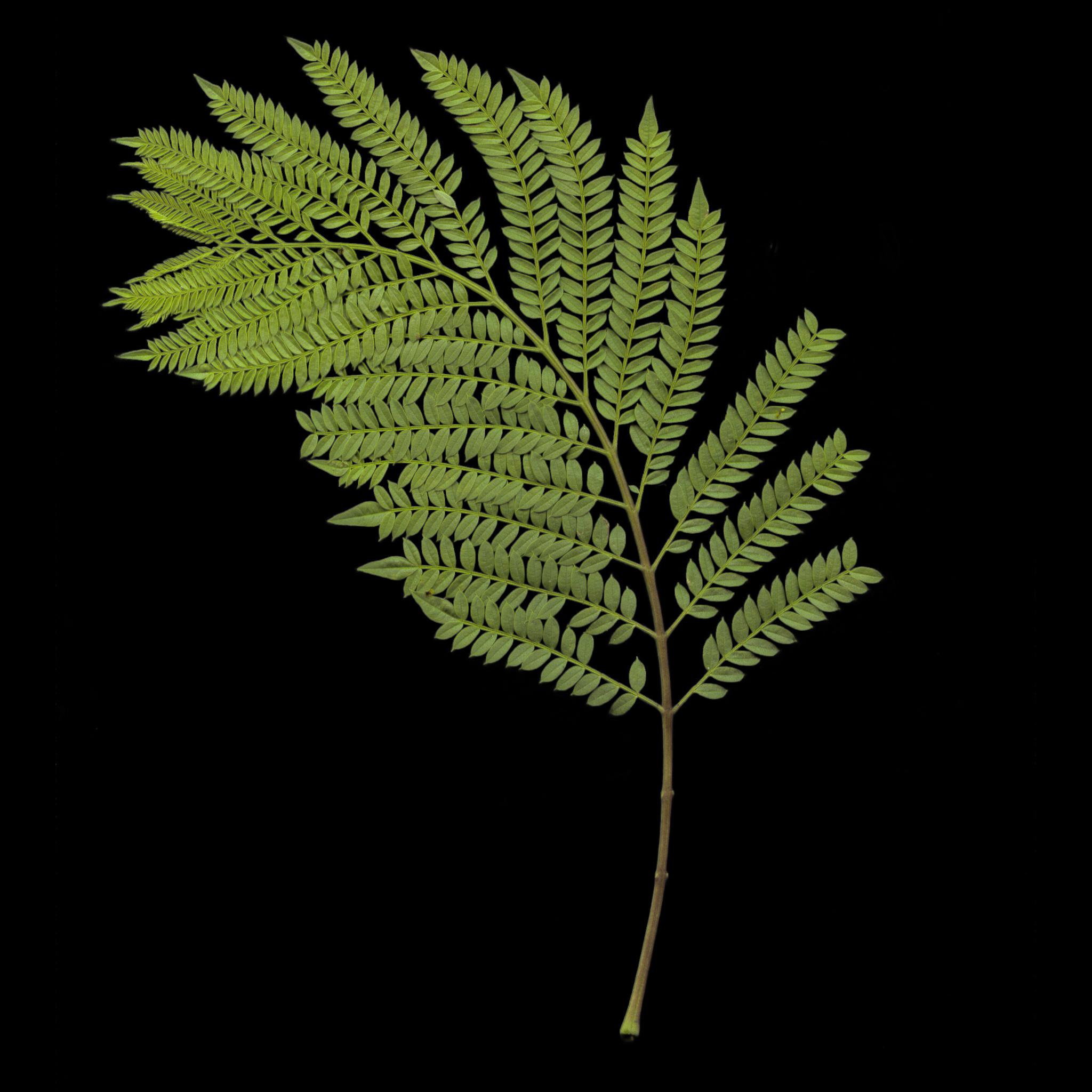 tex_leaf_001_c