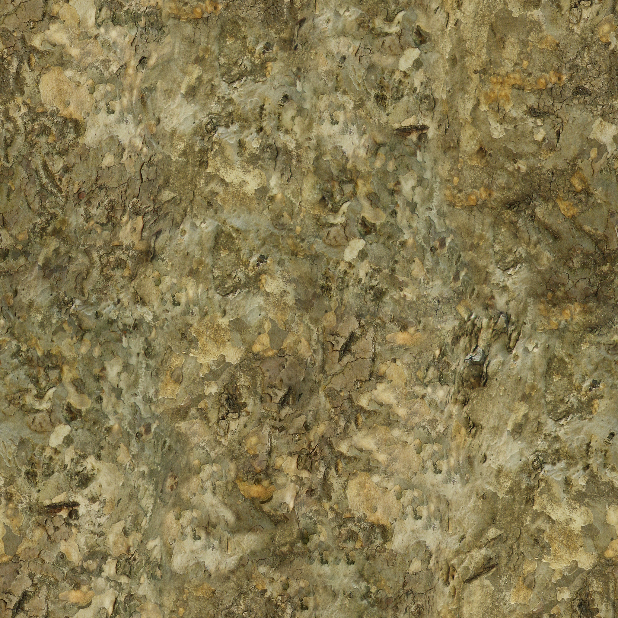 Tree Bark Texture #3 - Seamless - 2K