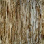 Tree Bark Texture #4 - Seamless - 2K