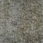 Tree Bark Texture #5 - Seamless - 2K