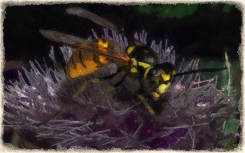 """Wasp"" - Photoshop Painting"