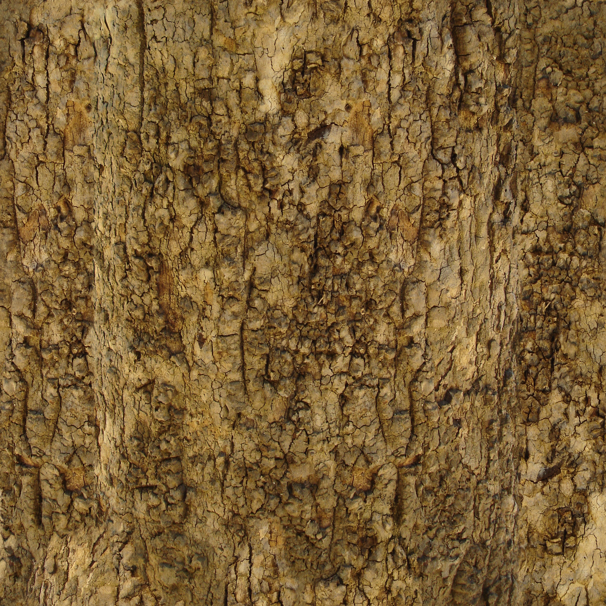 Tree Bark Texture #1 - Seamless - 2K