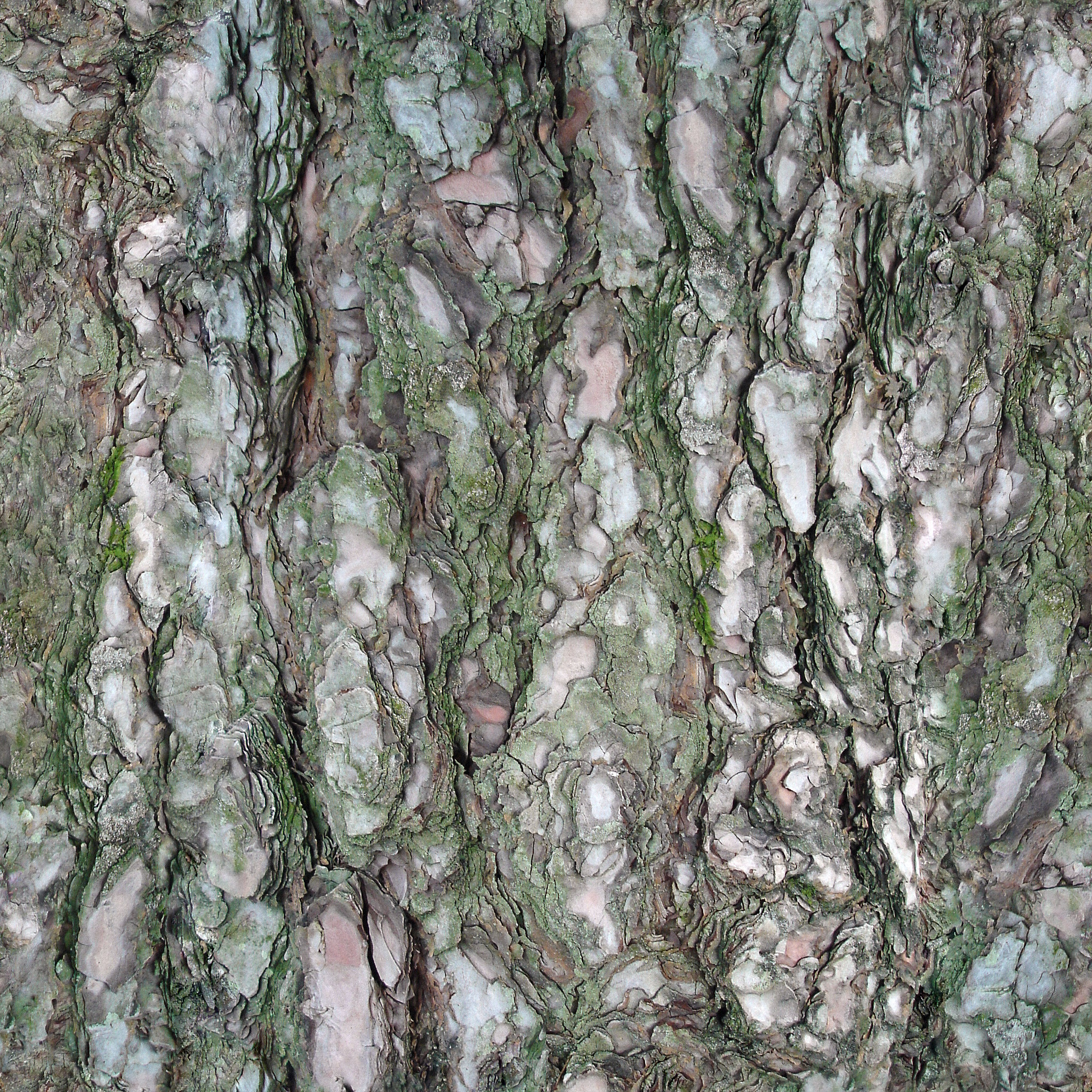Tree Bark Texture #2 - Seamless - 2K